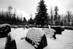 Walscheid - Cimetire romain (Hergott Loc) Tags: winter blackandwhite nature landscape noiretblanc pentax hiver paysage paysages dabo grandangle vosgesdunord