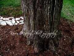 It's a Stumpy Life (karenmaebyphotography) Tags: brown tree graveyard stumpy stump