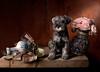 Still life with Puppy (kevsyd) Tags: roses stilllife schnauzer kevinbest