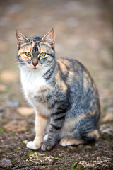 (Juan Antonio Cap) Tags: animal cat canon kat feline chat bokeh gato felino katze mace  gatto  kot gat koka kedi kissa kttur maka kucing pusa  mo moix    minino     pisic    canoneos5dmarkii