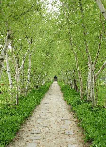 birch allee