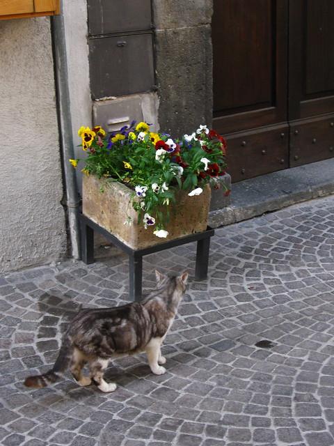 ネコと花壇のフリー写真素材