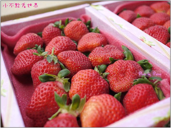 甜柿先生-草莓 (8).JPG