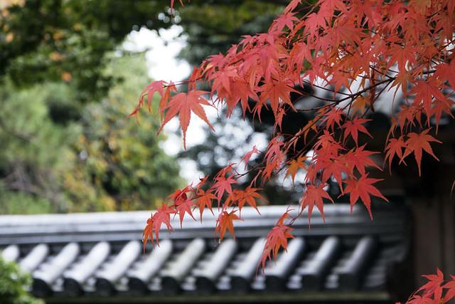 20101114_112658_秋篠寺