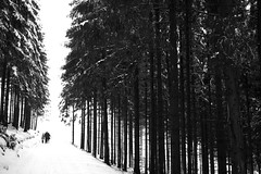 Hoch-Sauerland-Winter-NRW-152.jpg (MichaelSanderDU) Tags: schnee winter snow forest canon germany deutschland natur du ms nrw wald sander sauerland hochsauerland canon5dmarkii msimpressionen michaelsanderduisburg michaelsanderdu michaelsanderfotografie michaelsanderfoto fotografiemichaelsander