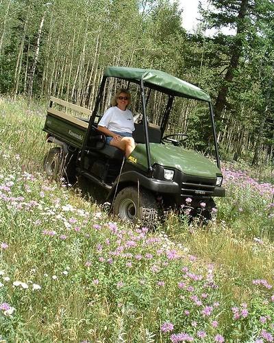 73 Mule & Wildflowers 8-01