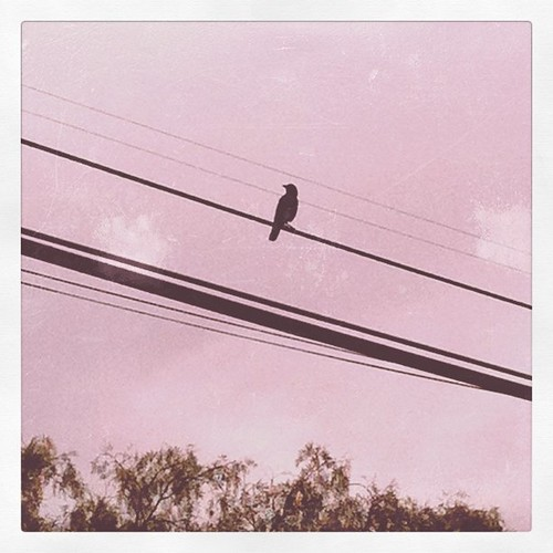 Bird on a wire. Mr. Crow was watching me while I work.