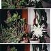 My garden 8