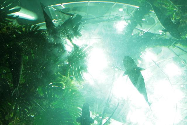 overhead aquarium