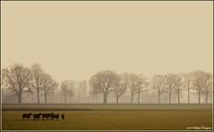 17feb11 Twente.  View on black ! (guus timpers) Tags: zwart twente bruin schapen schaap wierden natuurfotografie buitengebied ypelo