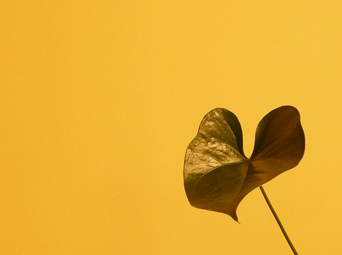 Leaf on Yellow