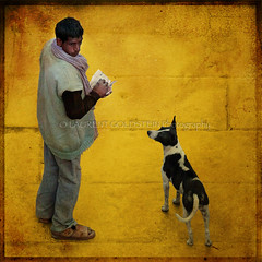 Golden Alliance (designldg) Tags: winter people dog india man animal yellow square gold amber colours atmosphere human soul varanasi kashi ganga ganges ghats benares benaras garment uttarpradesh  indiasong
