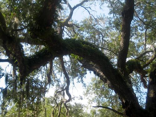 feb-trees-2