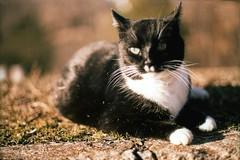 Stray Cat (David Sherret) Tags: cat canon 50mm virginia fuji velvia lynchburg va a1 100asa 2011