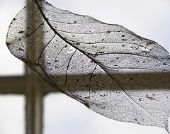 Botaniska trdgrden (wirehn) Tags: tema svartvitt