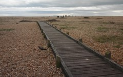 Dungeness walk to the Spit