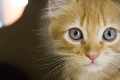[フリー画像] 動物, 哺乳類, ネコ科, 猫・ネコ, 子猫・小猫, 201103011100