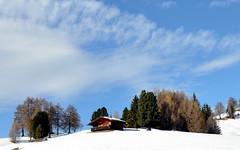 CASETTA con Alberi Nuvole Neve (aldofurlanetto) Tags: alberi nuvole neve casetta seiseralm sanon natureandnothingelse