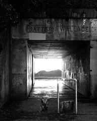 Entrance to the Battery Wallace Casement (San Francisco Gal) Tags: california ca history nationalpark fort steel marin wwii cement logs worldwarii barry headlands marincounty shrubs marinheadlands fortbarry batterywallace ggnp ftbarry