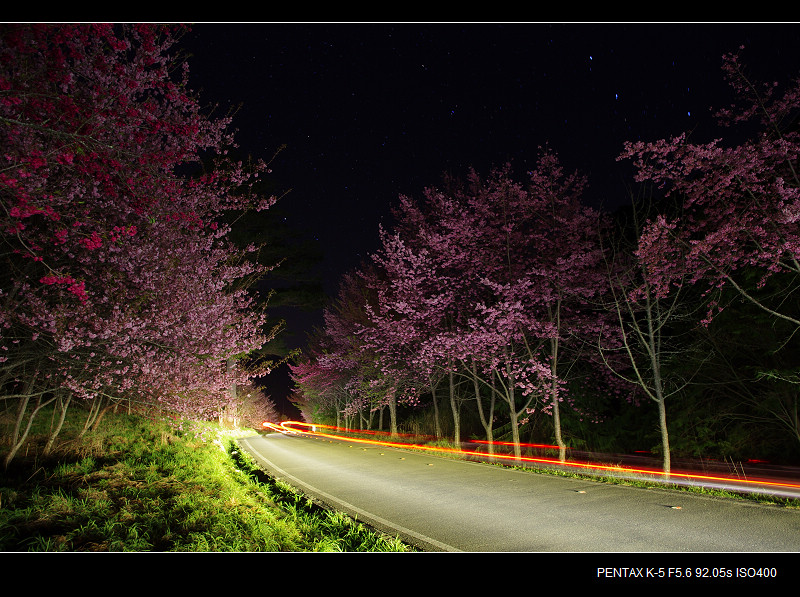 [分享]武陵夜櫻