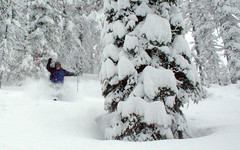 - Lookout Pass Tree skiing