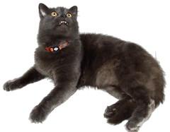 Harley whats up? (harleyannie) Tags: silly cute cat grey feline sweet gray kitty harley