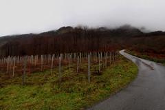 Still winter (enrix64) Tags: winter mist colors fog colours vine cs 1001nights nebbia inverno colori calabria buonvicino 1001nightsmagiccity enrix enrix64