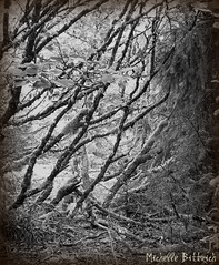 Into the Tangle (Michelle Bittrich) Tags: trees blackandwhite moss forestleaves