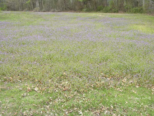 purple flowers in the grass