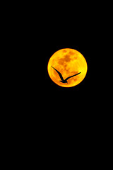 Seagull Crossing the Super Moon (in Explore) (mimsjodi) Tags: bird night 1000views seeninexplore supermoon