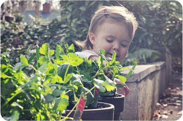 planting08