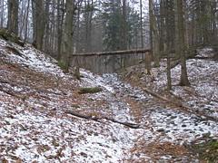 Skok wzwy? (magro_kr) Tags: las snow mountains nature forest poland polska natura gry nieg gory malopolska przyroda maopolska beskidy beskidsadecki snieg maopolskie malopolskie beskidsdecki