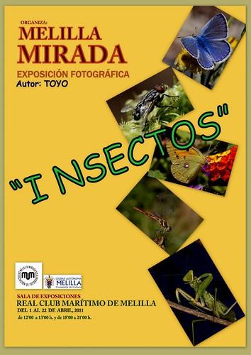 cartel def. macro insectos