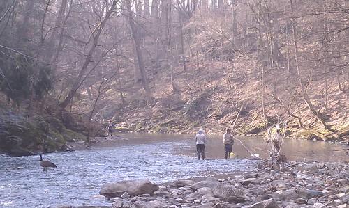 Trout, Wissahickon Creek