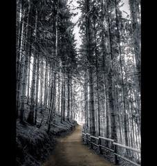 Forest path (Sam ) Tags: forest handy landscape photo yahoo europa europe flickr sam path ericsson sony picture pic eifel landschaft wald shining hdr weg bitburg rheinlandpfalz artisticphotos vatio greatphotographers itsawonderfulworld biersdorf rhinelandpalatine dragondaggeraward daarklands daarklandsexcellence artistoftheyearlevel4