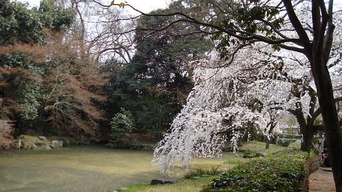2011/04 京都御所 #01