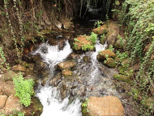 Israel, Tel Dan Nature reserve