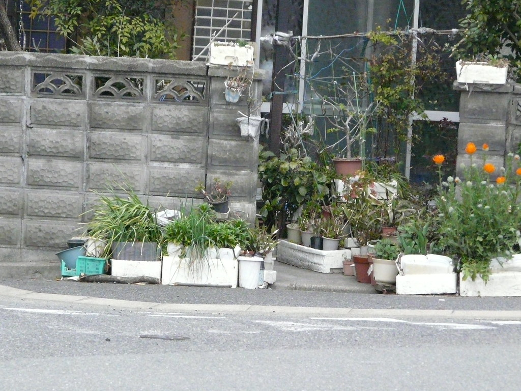 Polystyrene Planting