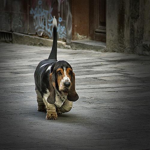 don perro by vdorse