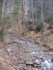 Roztoka Wielka (magro_kr) Tags: las mountains nature water creek forest river spring stream poland polska natura góry woda gory wiosna malopolska przyroda małopolska rzeka beskidy potok beskidsadecki małopolskie malopolskie beskidsądecki rytro roztoka