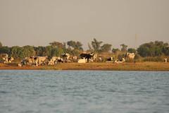 West Africa-4785
