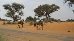 West Africa-2513