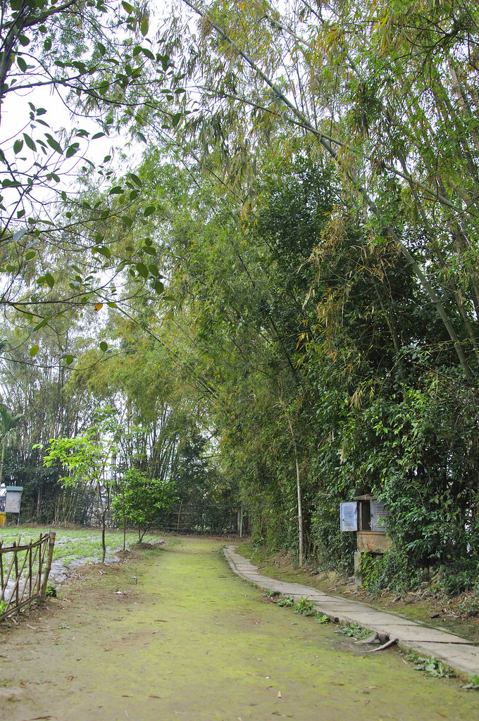 Visiting Sen Village- President Ho Chi Minh's Homeland