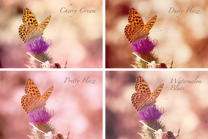 butterfly_action