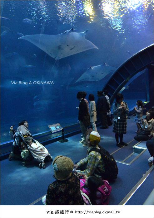 【沖繩景點】美麗海水族館~帶你欣賞美麗又浪漫的海底世界!36