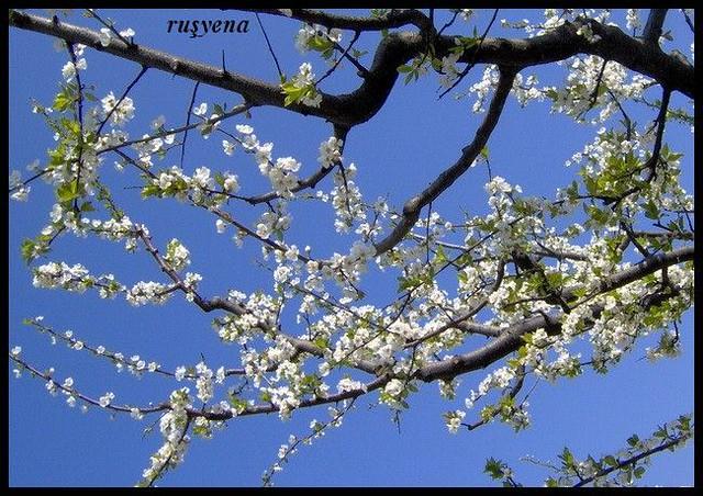 bahar çiçekleri 1