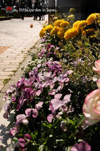 spring-in-tokyo-3