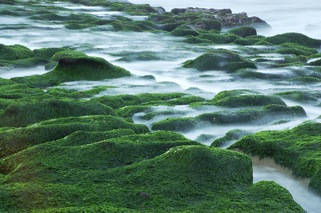 2011.04.09 台北 / 老梅石槽