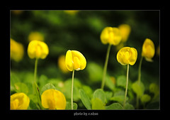 Blooming yellow flowers [explored] (e.nhan) Tags: flowers light flower art nature yellow closeup landscape colorful colours dof bokeh arts backlighting enhan