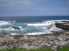 IMG_1720 (Anna Kipervaser) Tags: ocean beauty island hawaii peace oahu tranquility snorkeling pele monkseal